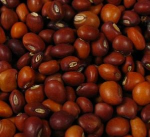 Read more about the article तूर (Pigeon pea)