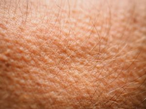 Read more about the article त्वचा (Skin)