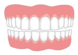 दात (Teeth)