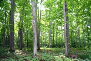 Read more about the article देवराई (Sacred grove)