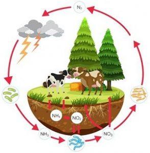 नायट्रोजन चक्र (Nitrogen cycle)