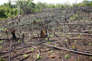 निर्वनीकरण (Deforestation)