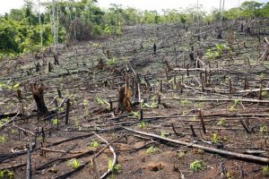 Read more about the article निर्वनीकरण (Deforestation)