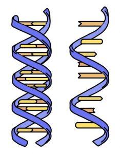 न्यूक्लिइक आम्ले (Nucleic acids)