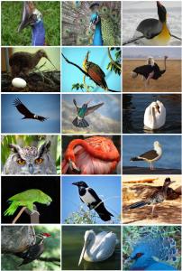 पक्षी वर्ग (Class aves)
