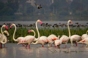 पक्षी स्थलांतर (Bird migration)