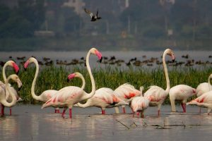 Read more about the article पक्षी स्थलांतर (Bird migration)