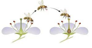 परागण (Pollination)