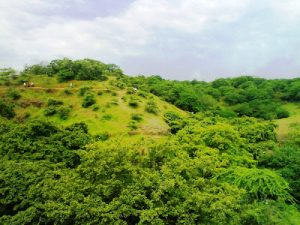 येडशीरामलिंग अभयारण्य (Yedshi Ramling Wildlife Sanctuary)