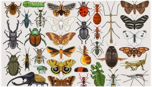 Read more about the article कीटकविज्ञान (Entomology)