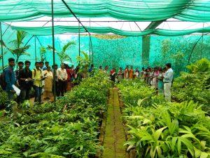 अग्रणी वनस्पती उद्याने (Lead Botanic Gardens)
