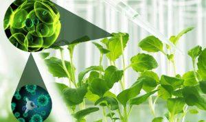 अब्जांश तंत्रज्ञान :बीजविज्ञानआणि पीक उत्पादन (Nanotechnology in Seed technology and Crop production)
