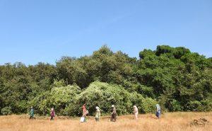 देवराईचे पुनरुज्जीवन (Regeneration of Sacred Groves)