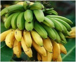 केळी (Banana)