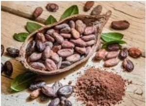 Read more about the article कोको (Cocao)