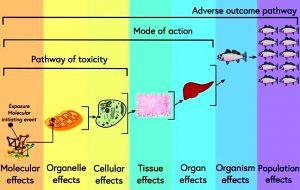 अब्जांश पदार्थ विषशास्त्र (Nanotoxicology)
