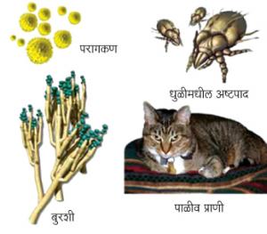 अधिहर्षता (Allergy)