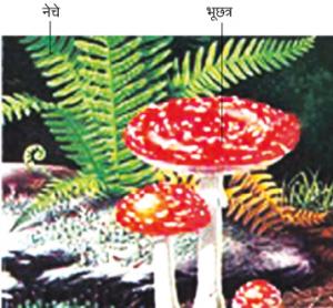 अपुष्प वनस्पती (Non-flowering plants)