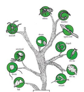 अपृष्ठवंशी (Invertebrates)