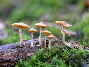 अळिंब (Mushroom)