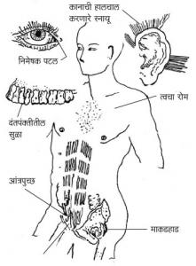 अवशेषांग (Vestigial Organ)