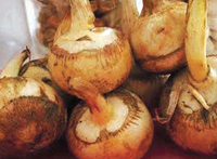 Read more about the article आरारूट (Arrowroot)