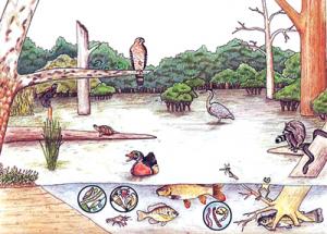 आर्द्रभूमी परिसंस्था (Wetland ecosystem)