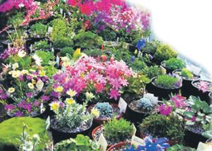 आल्पीय वनस्पती (Alpine plants)