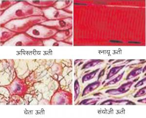 ऊती (Tissue)