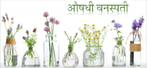 औषधी वनस्पती (Medicinal plants)