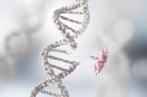 Read more about the article उत्परिवर्तन (Mutation)