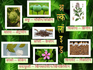 Read more about the article अल्कलॉइड (Alkaloid)