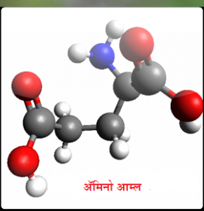 Read more about the article अॅमिनो आम्ले (Amino acids)