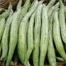 Read more about the article पडवळ (Snake gourd)