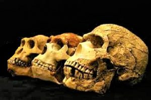 जीवशास्त्रीय मानवशास्त्र (Biological Anthropology)