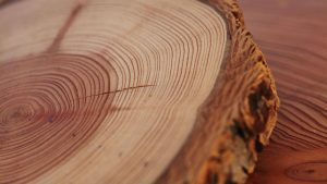 Read more about the article वृक्षवलयमापन पद्धत (Dendrochronology/Tree-Ring Dating)