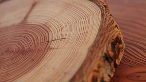वृक्षवलयमापन पद्धत (Dendrochronology/Tree-Ring Dating)