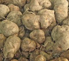 Read more about the article कुरका (Country Potato)