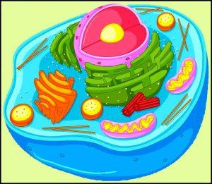 प्राणी पेशी (Animal cell)