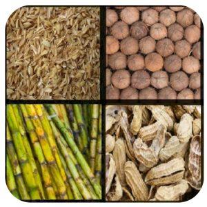 जैव इंधन (Biofuel) : पहा जैव वस्तुमान