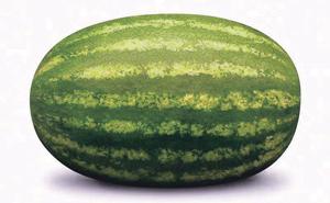 टरबूज (Cantalop) : पहा कलिंगड.