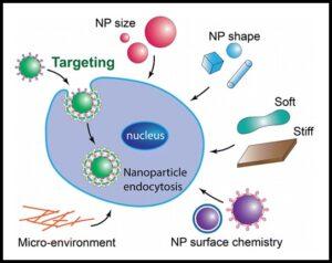 अब्जांश पदार्थांचे जैविक पेशीवर होणारे परिणाम (Effect of nanomaterials on bio-cell)