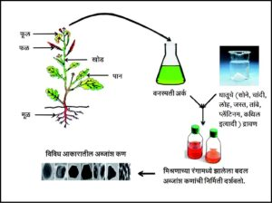 Read more about the article वनस्पती आधारित अब्जांश कण निर्मिती (Plant based synthesis of nanoparticles)