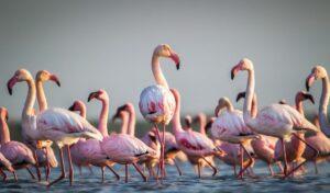 जायकवाडी पक्षी अभयारण्य ( Jayakwadi Bird sanctuary)