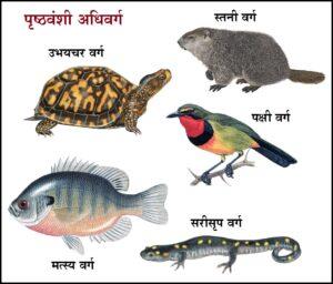 पृष्ठवंशी उपसंघ (subphylum Vertebrata)
