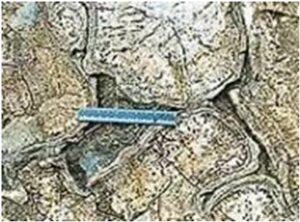 शिला स्मारके : उशी लाव्हा (Rock Monuments : Pillow Lava)