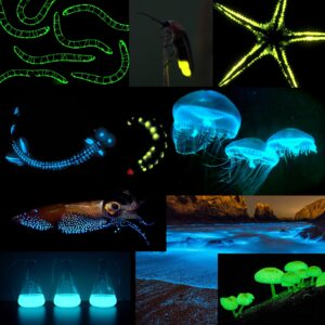 जीवदीप्ती (Bioluminescence)