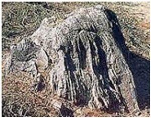 शिला स्मारके : नेफेलीन सायनाइट (Rock Monuments : Nepheline Syenite)