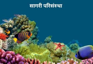 सागरी परिसंस्था (Marine Ecosystem)