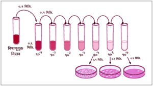विषाणू मापनपद्धती : प्लाक गणना (Plaque-forming unit)